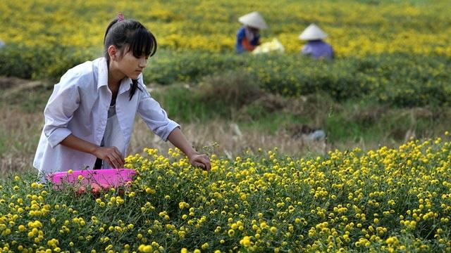 Nữ sinh nườm nượp rủ nhau kiếm tiền trên cánh đồng đẹp như mơ - 8