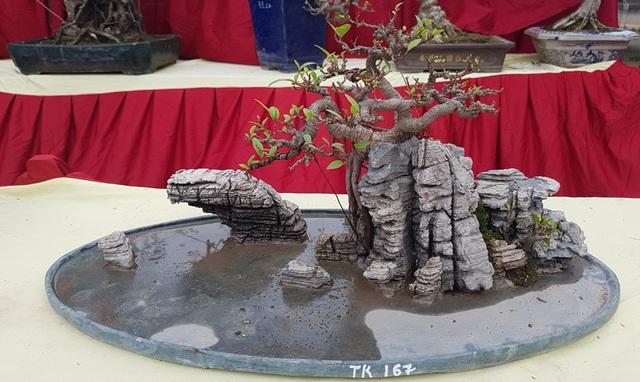 Cuộc đọ cây tiền tỷ của dân làng Triều Khúc - 8