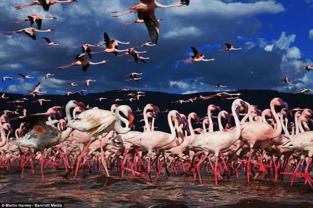 Những cuộc di cư đáng kinh ngạc của thế giới động vật - 8