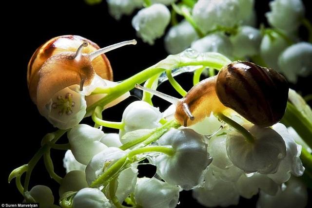 Bộ ảnh tuyệt đẹp về loài ốc sên dưới mưa - 8
