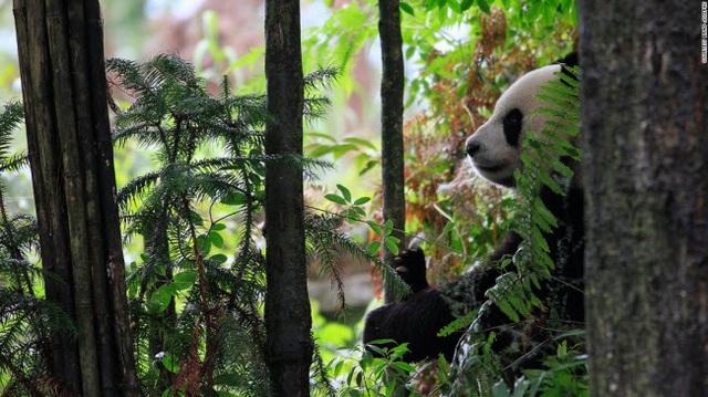 Những tour khám phá động vật hoang dã hấp dẫn nhất thế giới - 9