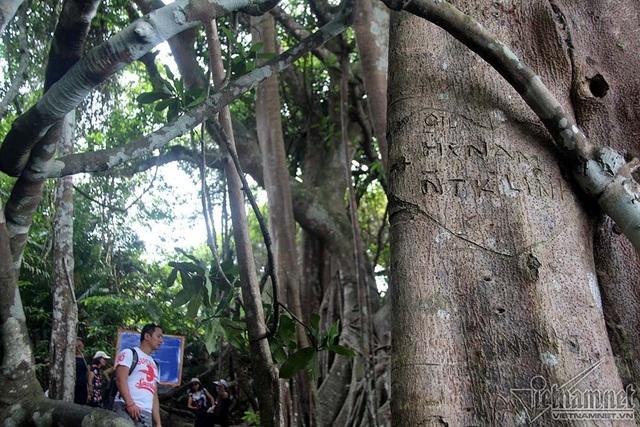 """Cây 800 tuổi ở Đà Nẵng """"đau đớn"""" vì chằng chịt """"lời tỏ tình"""" - 9"""