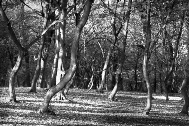 Nhiều du khách tới rừng Hoia Baciu đã trở về trong cảm giác kinh sợ. Một số người cho biết cơ thể họ đã bị bỏng và phát ban mà không rõ nguyên nhân sau khi khám phá nơi này. Nhiều người bị thuyết phục rằng, khu rừng bị ma ám, trong khi người dân địa phương không dám đặt chân vào rừng.