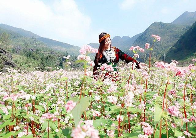 """""""Phát cuồng"""" vẻ đẹp hoa tam giác mạch bung nở trên sườn núi đá Hà Giang - 9"""