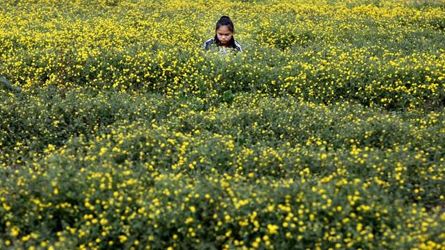 Nữ sinh nườm nượp rủ nhau kiếm tiền trên cánh đồng đẹp như mơ - 9