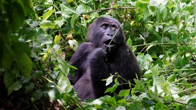 Những tour khám phá động vật hoang dã hấp dẫn nhất thế giới - 10