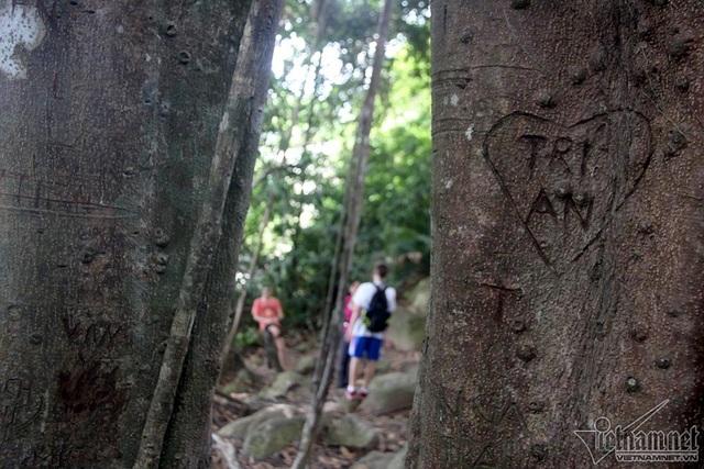 """Cây 800 tuổi ở Đà Nẵng """"đau đớn"""" vì chằng chịt """"lời tỏ tình"""" - 10"""