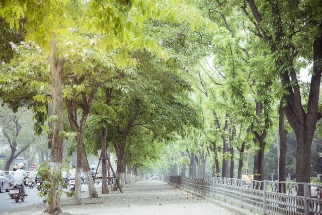 Thời khắc giao mùa của Hà Nội thường diễn ra chóng vánh trong vài tuần. Đi dưới những hàng cây thay lá, ngắm nhìn khoảnh khắc tuyệt đẹp mà thiên nhiên ban tặng cảm thấy lòng bình yên và dịu dàng hơn trước nhịp sống hối hả, xô bồ bên ngoài.
