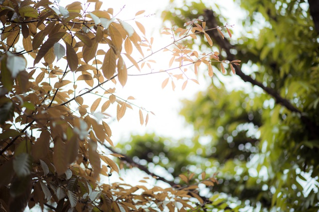 Những chồi non mơn mởn nhú lên trên những thân cây thô ráp như báo hiệu một mùa mới đến, đem sức sống mãnh liệt lan tỏa khắp mọi nơi.