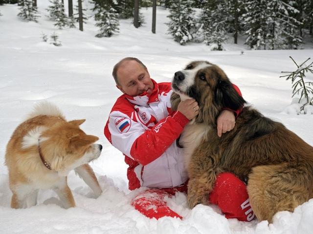 Ông Putin là người yêu động vật. Ông sở hữu một con chó Labrador đen 15 tuổi tên là Konni, một con giống Akita Nhật Bản tên là Yume và một con thuộc loài Karakachan tên là Buffy. (Ảnh: AP)