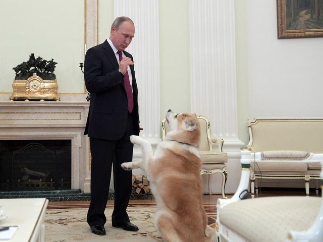 Ông Putin đã chơi với Yume và cho chú chó trình diễn một vài động tác trong một cuộc phỏng vấn của ông vào năm 2016 (Ảnh: AP)