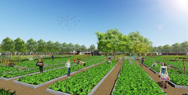 Một chủ đầu tư đưa ra chương trình khuyến mại: Mua nhà được tặng vườn rau sạch