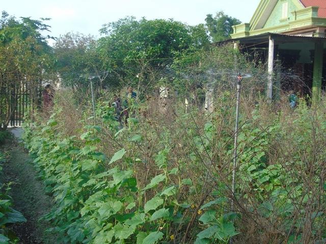 Hệ thống tưới nước của một hộ dân tại thôn Tú Loan 3 giúp giảm công sức lao động.