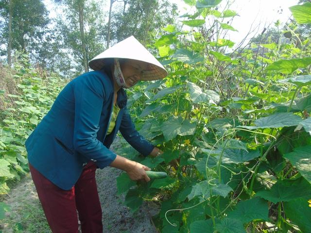 Dân nghèo ở xã bãi ngang giàu lên nhờ trồng rau - 1