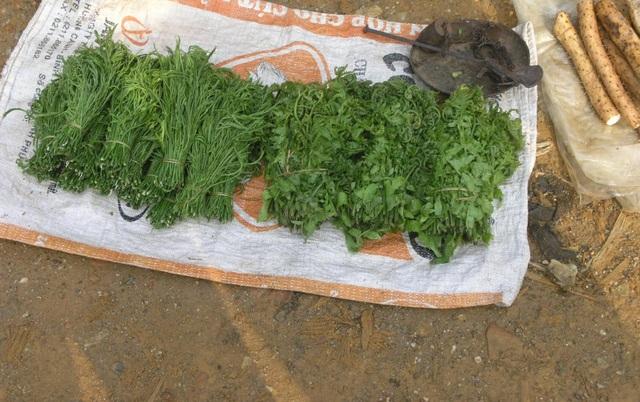 Rau dớn là loại rau mọc hoang dã bìa rừng và ven các dòng suối được coi là loại rau đặc sản, rau sạch không những được bán thường xuyên trong các chợ phiên Tây Bắc mà còn được người dân mang bán sang Trung Quốc với giá khá cao.