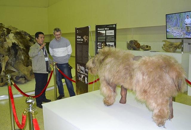 Xác tê giác chôn vùi 34000 năm dưới lớp băng tuyết còn nguyên lông và sừng - 6