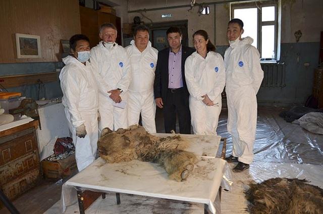 Xác tê giác chôn vùi 34000 năm dưới lớp băng tuyết còn nguyên lông và sừng - 4