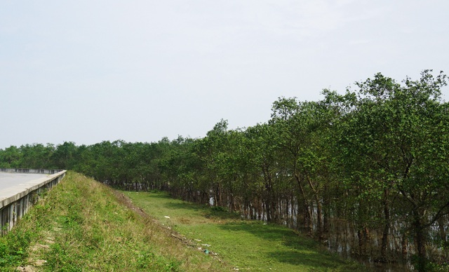Nằm bên đường sinh thái ven Sông Lam là rừng ngập mặn nguyên sinh trù phú. Những cây bần ken chặt vào nhau được xem là lá phổi xanh, bảo vệ hệ thống đê điều, chống ngập mặn, chống xói lở, thiên tai. Không chỉ có ý nghĩa về điều hòa khí hậu mà rừng bần này còn là nơi có sự đa dạng hệ sinh thái động, thực vật
