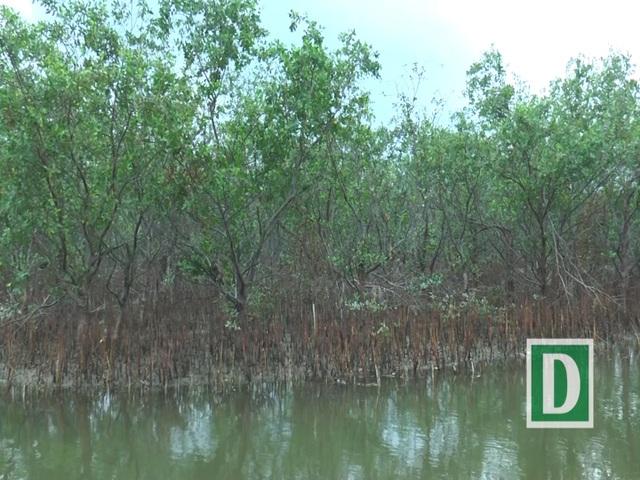 Hệ thống rễ cây bám sâu dưới đất. Rừng bần còn góp phần tạo nên sự đa dạng sinh thái