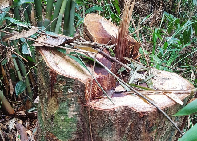 Những dấu hiệu bất thường từ việc phá rừng? - 2