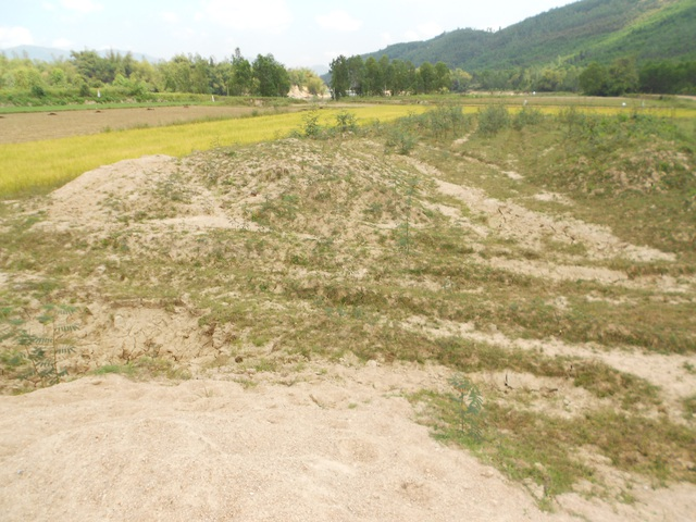 Nhiều diện tích ruộng ở cánh đồng Hóc Công xã Phước Thành (huyện Tuy Phước, Bình Định) bị phủ dày lớp đất, cát do việc khai thác đá của Công ty TNHH Hoàn Cầu Granite gây ra