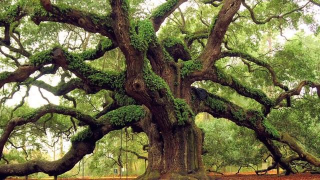 Xuất bản 100 truyện ngắn khi 1.000 cây cổ thụ tròn… 100 tuổi - 3