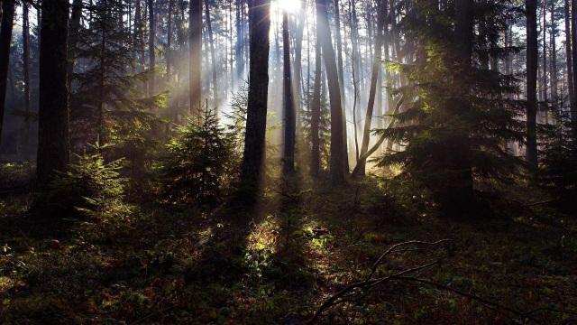 Xuất bản 100 truyện ngắn khi 1.000 cây cổ thụ tròn… 100 tuổi - 2