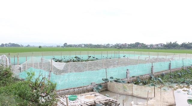Khu bể nuôi rắn mòng bán tự nhiên rộng 350m2, của anh Phạm Ngọc Tĩnh (33 tuổi) nằm giữa cánh đồng ở thôn Tu Lễ (Kim Đường, Ứng Hòa, Hà Nội).