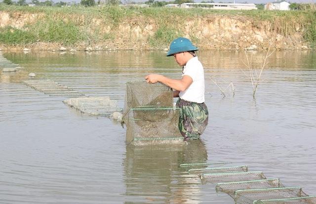 Anh Tĩnh dùng lưới chụp để bắt các loại tôm, cá nhỏ cho bể nuôi rắn mòng của mình.