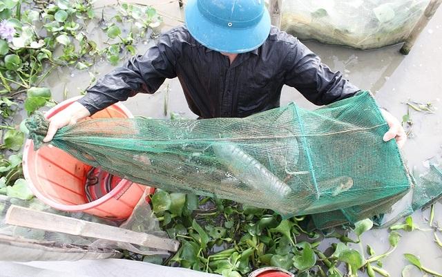 Anh Tĩnh dùng lưới chụp để bắt rắn mòng, đôi khi bẫy được cả cua, ếch.