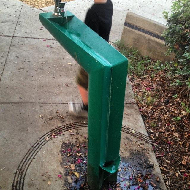 Thiết kế vòi uống nước tự động thông minh tại công viên cho phép cả chủ nhân lẫn thú cưng có thể dễ dàng sử dụng.