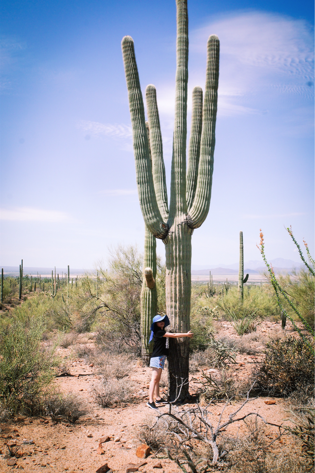 Thanh Mai bên cây xương rồng khổng lồ đặc trưng của những vùng khô cằn nước Mỹ