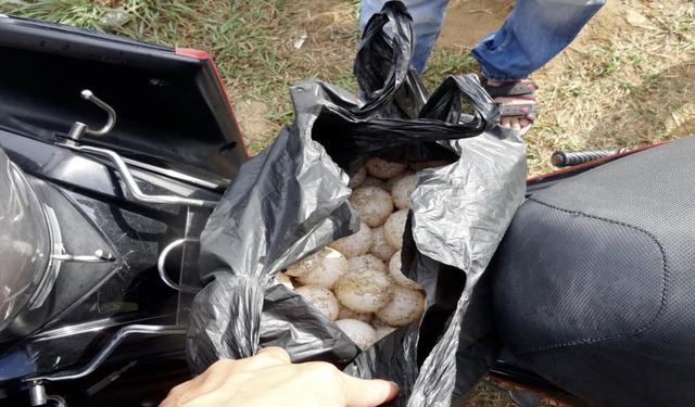 116 quả trứng Vich được dấu trong xe gắn máy. (Ảnh do Vườn Quốc gia Côn Đào cung cấp)