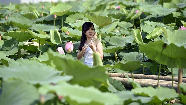 Hà Nội: Lội bùn chụp ảnh sen, phó nháy kiếm tiền triệu mỗi ngày - 9