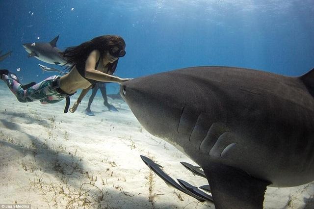 Cô gái xinh đẹp bơi cùng cá mập mà không dùng thiết bị bảo hộ - 6