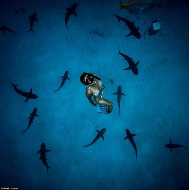 Cô gái xinh đẹp bơi cùng cá mập mà không dùng thiết bị bảo hộ - 5