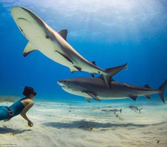Cô gái xinh đẹp bơi cùng cá mập mà không dùng thiết bị bảo hộ - 3