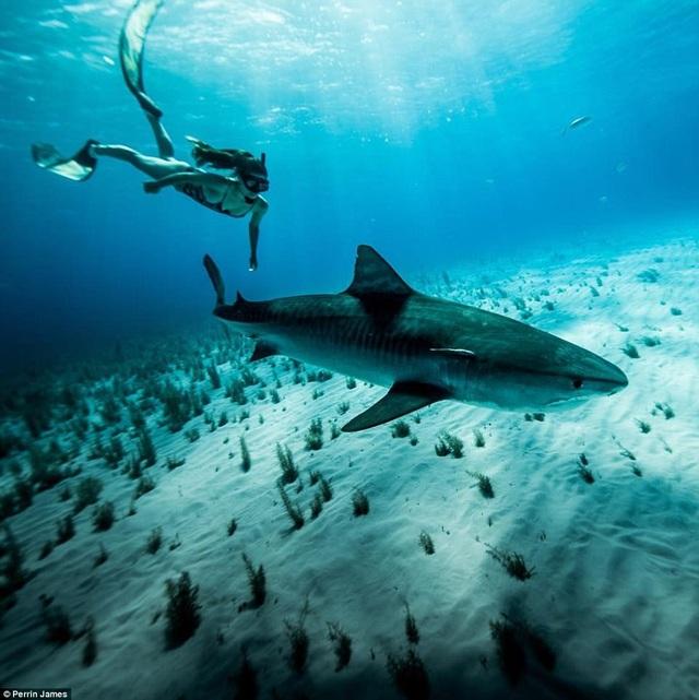 Cô gái xinh đẹp bơi cùng cá mập mà không dùng thiết bị bảo hộ - 2