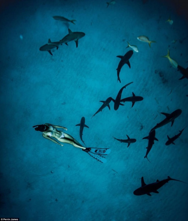 Cô gái xinh đẹp bơi cùng cá mập mà không dùng thiết bị bảo hộ - 1