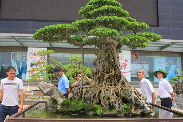 """Siêu cây """"mâm xôi con gà"""" là cây sanh cổ thụ có tuổi đời hơn 150 tuổi. Năm 2010, trong dịp Đại lễ 1.000 năm Thăng Long – Hà Nội, cây được giới chuyên môn xếp vào """"tứ kỳ mộc"""" của đất ngàn năm văn vật. Chủ nhân của siêu cây này là ông Nguyễn Nam Thành (Việt Trì, Phú Thọ). Cây có chiều cao 1m65, chiều ngang 2m, trọng lượng cả đá khoảng 1 tấn, có tán xòe rộng như mâm xôi, gốc và thân cây nằm trên khối đá nhỏ tạo thành hình gà."""