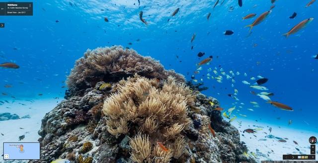 Dưới đáy đại dương ở đảo Nishibama, Aka Island, Okinawa, Nhật Bản.