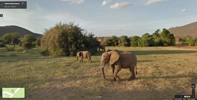 Voi dạo chơi ở vùng Samburu, Kenya