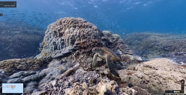 Dưới đáy đại dương ở hòn đảo Heron Island, Great Barrier Reef, Úc.