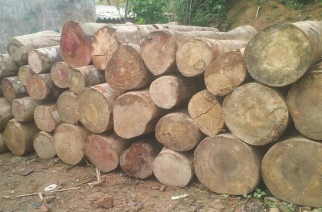 Lực lượng chức năng huyện Quan Sơn đã thu hồi số gỗ khai thác trái phép