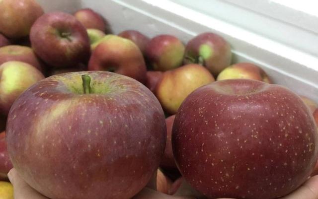 So với các loại táo nhập khẩu từ Úc, Mỹ... táo đá có ngoại hình không bắt mắt bằng tuy nhiên lại rất hút khách