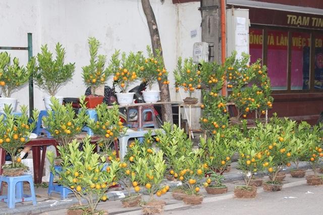 Chợ hoa Hàng Lược là chợ truyền thống chỉ mở mỗi dịp cuối năm, từ khoảng 20 tháng Chạp. Trước thềm năm mới, nơi đây là một trong những điểm đến yêu thích của nhiều người dân Hà Nội và người nước ngoài.