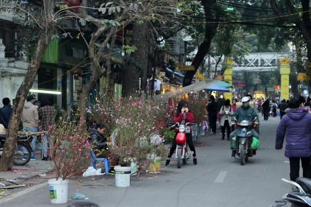 Sắc đào, sắc quất đã xuất hiện trên khắp các con phố. Do thời tiết năm nay khá khắc nghiệt nên đào nở hoa khá sớm.