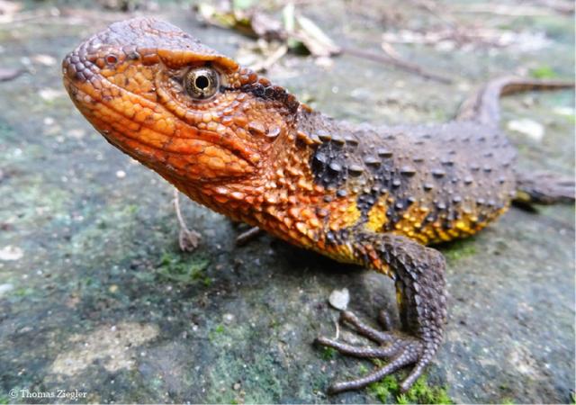 Phát hiện nhiều loài động vật mới ở khu vực sông Mekong - 1