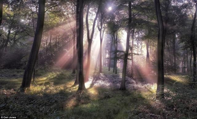Những khoảnh khắc về thế giới tươi đẹp đang hiện hữu xung quanh cuộc sống - 3
