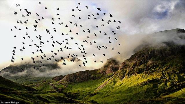 Một đàn chim bay ngang qua thung lũng Glencoe ở Scotland.